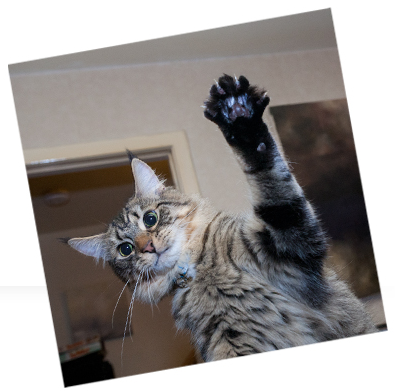 Kitty_HighFive